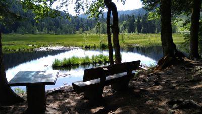 lac de Lispach, Vosges